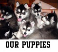 Our Puppies